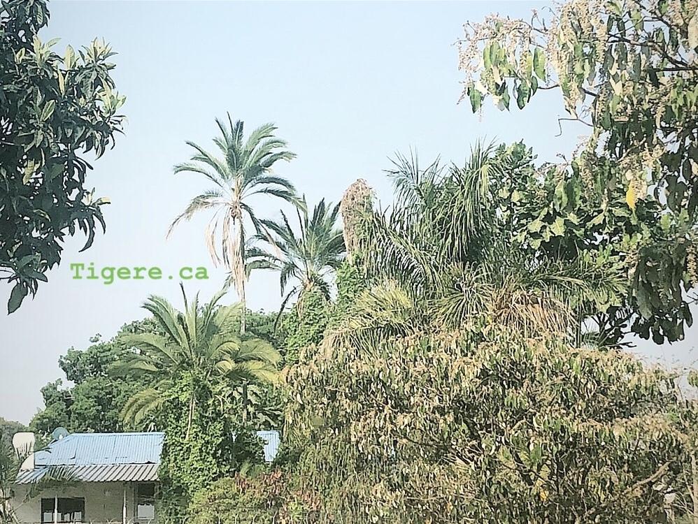 Trees, nature, africa, Harare, Zimbabwe